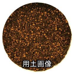 オリーブの培養土25L×2袋セット[g26]