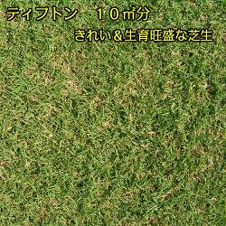 【芝生】ティフトン約10平米分(2トレイ)