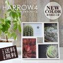 () 【送料無料】 フォトフレーム 壁掛け スタンド 写真立て ハロウ4 木製 4窓 結婚祝い 複数 プレゼント おしゃれ かわいい