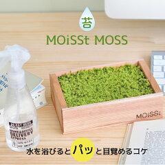 苔栽培キット【モイストモス】ボックスタイプすなごけ栽培観葉植物聖新陶芸