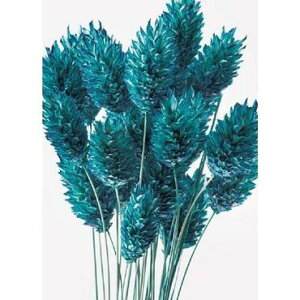 大地農園/ポアプランツ 15g クラシックブルー/42020-630 プリザーブドフラワー 花材 大地農園:ドライフラワー スモールフラワー ポアプランツ