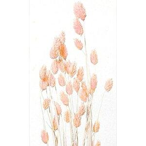 大地農園/ポアプランツ 15g ベビーピンク/42020-101 プリザーブドフラワー 花材 大地農園:ドライフラワー スモールフラワー ポアプランツ