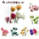 ハーバリウム花材キット シルバーデージー 6個入り 選べる7セット/プリザーブドフラワー 花材 大地農園:ドライフラ…