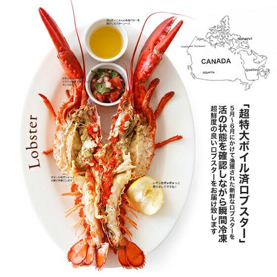 Lサイズ!ぎぎゅッと詰まった身が堪らない!カナダ/プリンスエドワード島産:ボイルオマールホール ネット入り(約350g-400g)(※春先の身が詰まった時期の限定漁獲品となります。【冷凍のみ】 【ロブスター オマール海老】