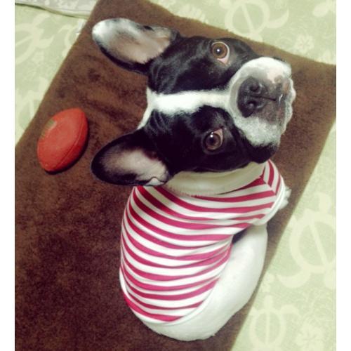 フレンチブルドッグ 服 パグ 服 赤マリンボーダー