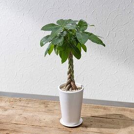 【日比谷花壇】観葉植物「パキラ(M)ホワイトポット」 おしゃれ インテリア