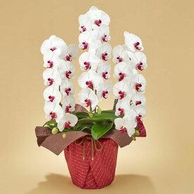 【日比谷花壇】「胡蝶蘭(赤リップ)3本立ち」 お祝い 開店祝い 鉢花
