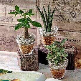【日比谷花壇】 環境にやさしいエコスギ観葉植物「パキラ・サンスベリア・ペペロミア3個セット」 おしゃれ インテリア