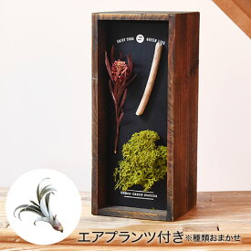 【日比谷花壇】 誕生日 花 プレゼント 観葉植物 URBAN GREEN MAKERS ハーバリウム ウッドボックス「ビーチ」インテリアキット