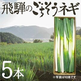 ソヤ畦畑自然栽培野菜BOXSサイズ飛騨旬の野菜セット6〜7品詰め合わせ