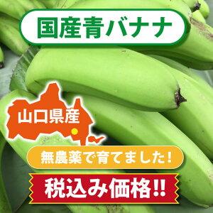 【皮ごと 国産バナナ】ひかりバナナ青バナナの量り売り!