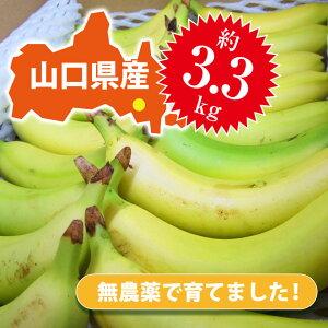 【皮ごと 国産バナナ】ひかりバナナ食べごろ見極め18本