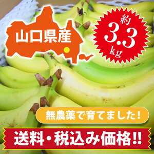 【ひかりバナナ】3.3kg 約18〜25本 国産バナナ バナナ 国産 ひかりバナナ もんげーバナナ 無農薬 フルーツ スムージー 自宅用 贈り物 ギフト おいしい 取り寄せ