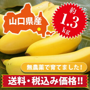 【ひかりバナナ】1.3kg 国産バナナ バナナ 国産 ひかりバナナ もんげーバナナ 無農薬 フルーツ スムージー 自宅用 贈り物 ギフト おいしい 取り寄せ