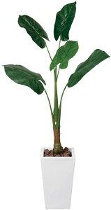 光触媒 観葉植物 光の楽園 くわず芋 高さ1.4m【インテリア リビング フロア 大型】