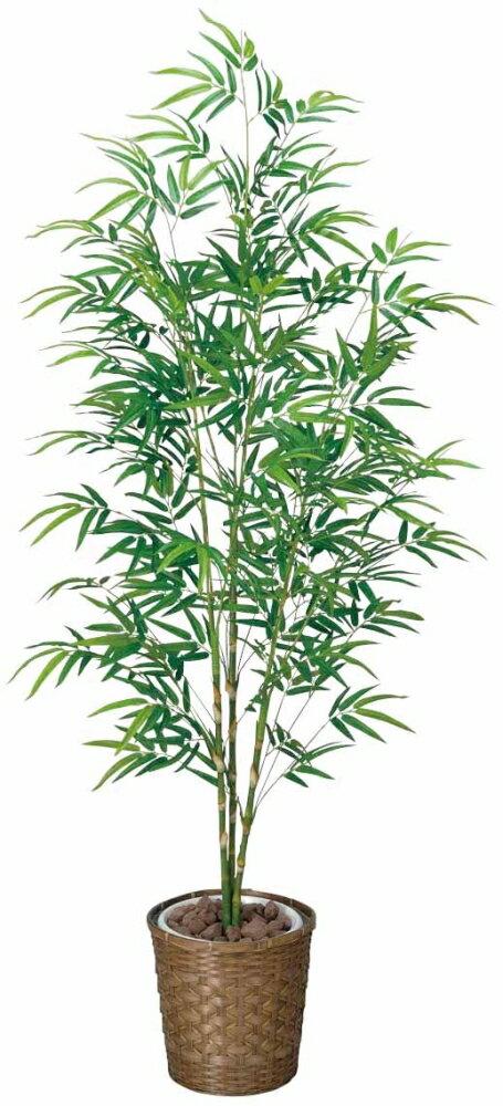 光触媒 光の楽園 青竹 高さ1.8m【観葉植物 大型 インテリアグリーン 】