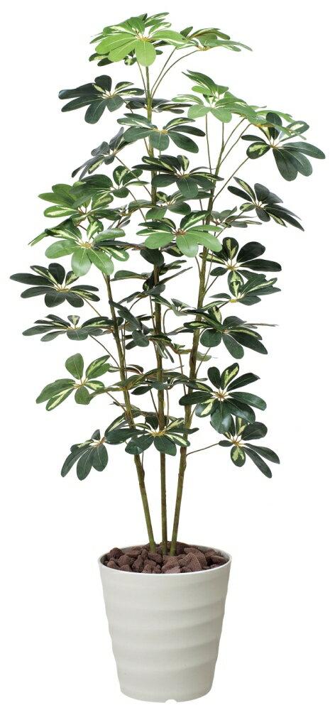 光触媒 人工観葉植物光の楽園 カポック斑入り 高さ1.5mインテリア 大型 人工観葉植物