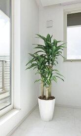 光触媒 観葉植物光の楽園 幸福の木 高さ1.6m【ドラセナ 人工観葉植物 大型 送料無料】新築祝い・開店祝い・開業祝いなどに