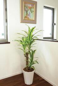 【送料無料】光触媒 人工観葉植物 光の楽園フレッシュドラセナ 高さ1.25m【インテリアグリーン 観葉植物 幸福の木】