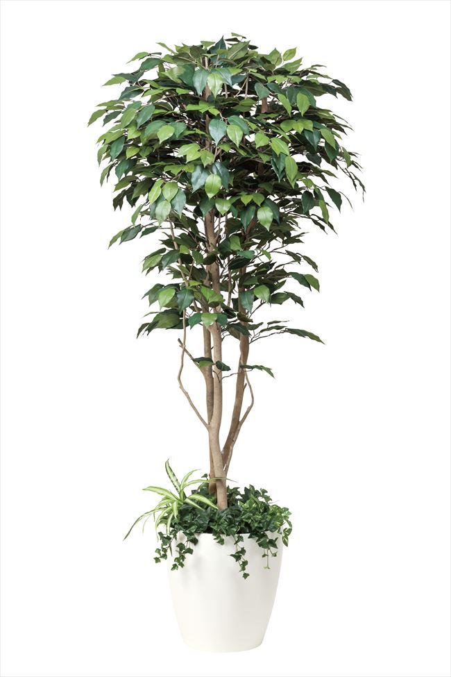 フィカスベンジャミン 高さ1.8m 植栽付【光の楽園 大型 人工植物 観葉植物 光触媒】