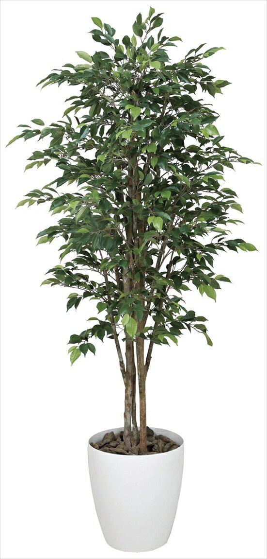 光触媒 光の楽園 ロイヤルベンジャミン 高さ1.8m【インテリアグリーン 人工観葉植物 大型】
