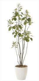 光触媒 人工観葉植物光の楽園 フィカスブランチツリー1.7mインテリア フェイクグリーン