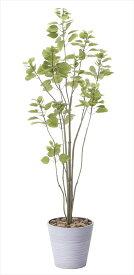 光触媒 人工観葉植物光の楽園 ブランチツリー1.7mインテリア フェイクグリーン