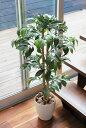 光触媒 観葉植物光の楽園 アルデシア 高さ90cmインテリア フェイクグリーン 人工観葉植物