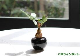 光触媒 人工観葉植物光の楽園 ミニグリーン インポット 選べる3タイプ パキラ/カクタス/ミックスフェイクグリーン 観葉植物 造花 インテリア