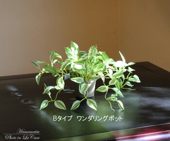 光触媒光の楽園【インテリアグリーン人工観葉植物】