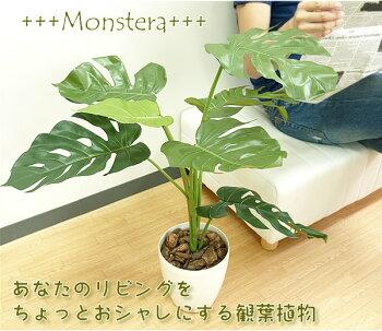 光触媒光の楽園モンステラ75【グリーン:テーブルタイプ観葉植物】【アジアンなインテリアにお勧め】