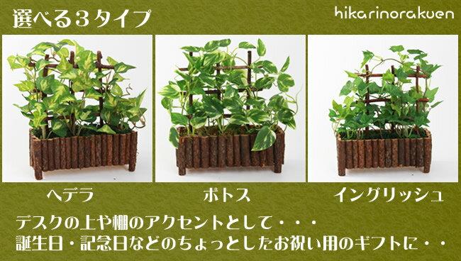光触媒 光の楽園ミニグリーン 選べる3タイプ ウッド【インテリア 観葉植物 人工観葉植物 フェイクグリーン】