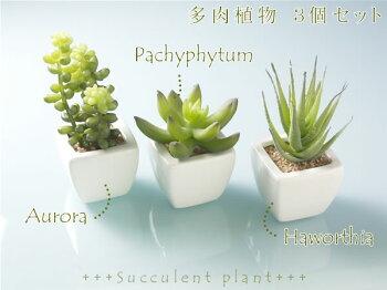 送料無料光触媒光の楽園多肉植物観葉植物