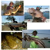 Abu Garcia World Monster WMCC-654M MGS AbuGarcia World Monster WMonster WMCC-654M MGS 1400569 fishing equipment fishing Bay Toroid Monster Rod featured store overseas Monster expedition pirarucu barramundi