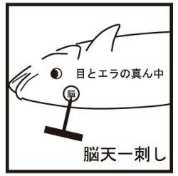 マジカルベイツオリジナル魚絞め具フィッシュスラストMagicalBaitsoriginalFishThrust【メール便OK】釣具フィッシング通販神経締め〆具鮮度道具ツール魚締め