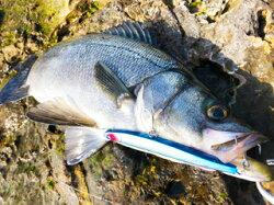 ブルーブルーアービン150SシンキングペンシルBlueBlueARVIN150Ssinkingpencil釣具フィッシングペンシルベイトシンペンシャローおすすめ通販シーバス青物真鯛