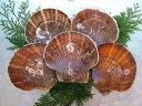 ホタテ ほたて 貝 【活ホタテ 300g前後-5枚(大)】 「送料込み」 生ほたて 帆立 生刺身  殻付きほたてお花見 母の日 …