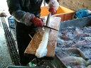 「冷凍タコ」 生タコ ミズタコ 【冷凍生たこ  たこ皮剥き 1本1kg前後】「送料無料」 活タコ仕上げ 生たこ お刺身 …