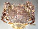 カニ タラバガニ 【活タラバガニ(メス) 特大サイズ1尾-3kg前後「特価品」】「送料込み」