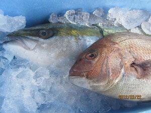 ぶり 鯛 出世めでたいセット ブリ(養殖)1本-5kg鯛1,2kgセット「送料込み」 母の日 父の日 お中元 お歳暮 ギフト