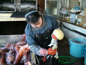 タコの卵 ミズタコ卵 冷凍タコの卵 たこまんま 1kg 北海道産2kg「送料込み」お花見 母の日 父の日 お中元 お歳暮 ギフト