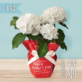 【母の日ギフト2021】黒茎アジサイ「ゼブラ」(4号鉢)/あじさい/紫陽花)