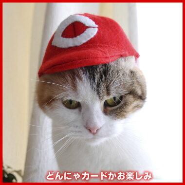 記念猫写真付き
