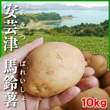 マルアカ馬鈴しょ「安芸津馬鈴薯」10kg広島県東広島市安芸津町赤土の丘で潮風を浴びて育った希少なじゃがいも