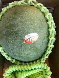 沖縄産キーツマンゴー 1玉