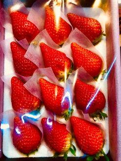 岐阜草莓华kagari