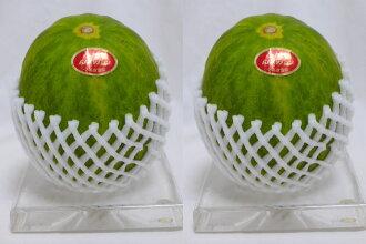 水果hiroha番木瓜哈密瓜2硬幣