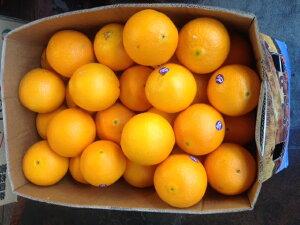 オレンジアメリカ産サンキストオレンジ1箱