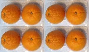 アメリカ・カルフォニア産オレンジ8玉