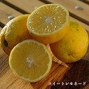 『レモネード』静岡県産 2S〜2Lサイズ 約1.2kg
